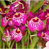 Blumen Christa